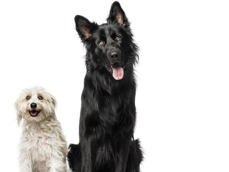 blog-dogs-1916