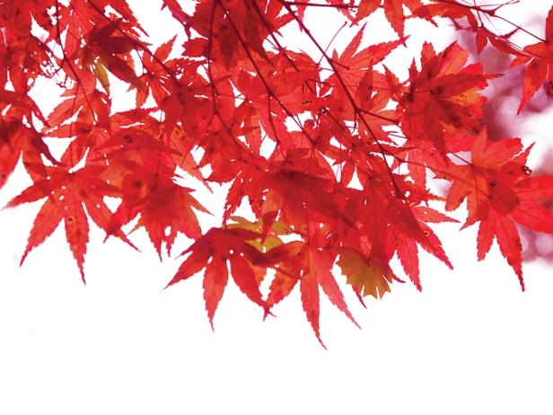 blog-fall-stigma