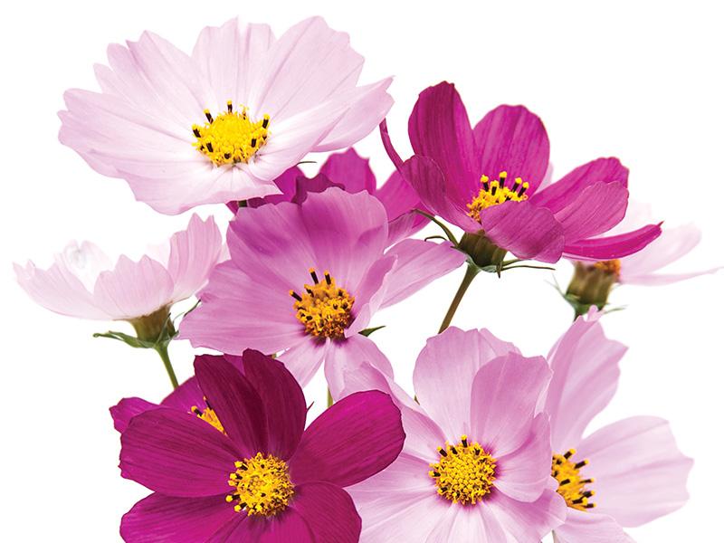 blog-_0002_summer-flowers